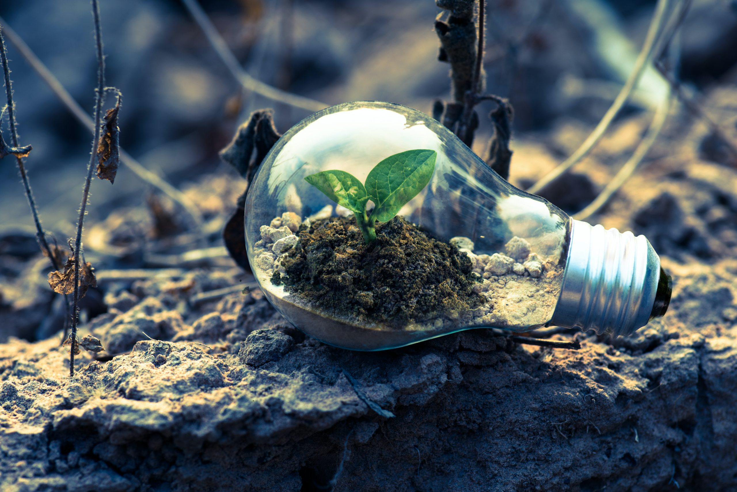 Avviso 2/2021 Formazione a sostegno della green transition e della circular economy nelle imprese aderenti